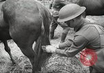 Image of 1st Cavalry Division Salem Oregon USA, 1942, second 35 stock footage video 65675063116