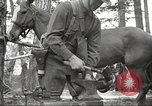 Image of 1st Cavalry Division Salem Oregon USA, 1942, second 51 stock footage video 65675063116