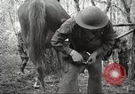 Image of 1st Cavalry Division Salem Oregon USA, 1942, second 57 stock footage video 65675063116