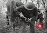 Image of 1st Cavalry Division Salem Oregon USA, 1942, second 59 stock footage video 65675063116