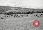 Image of 1st Cavalry Division Salem Oregon USA, 1942, second 47 stock footage video 65675063118