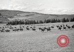 Image of 1st Cavalry Division Salem Oregon USA, 1942, second 50 stock footage video 65675063118