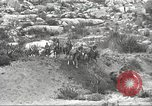 Image of 1st Cavalry Division United States USA, 1942, second 59 stock footage video 65675063121