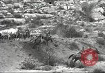 Image of 1st Cavalry Division United States USA, 1942, second 60 stock footage video 65675063121