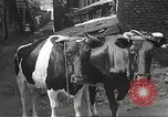 Image of Jews Dombrowa Poland, 1940, second 21 stock footage video 65675063125