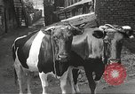 Image of Jews Dombrowa Poland, 1940, second 22 stock footage video 65675063125