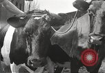 Image of Jews Dombrowa Poland, 1940, second 28 stock footage video 65675063125