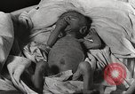 Image of war victims Europe, 1946, second 50 stock footage video 65675063149