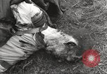 Image of Flossenbürg concentration camp atrocity victims Flossenburg Germany, 1945, second 46 stock footage video 65675063167