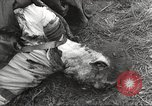 Image of Flossenbürg concentration camp atrocity victims Flossenburg Germany, 1945, second 48 stock footage video 65675063167