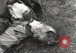 Image of Flossenbürg concentration camp atrocity victims Flossenburg Germany, 1945, second 50 stock footage video 65675063167