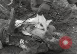 Image of victims of Flossenbürg Concentration Camp Flossenburg Germany, 1945, second 36 stock footage video 65675063168