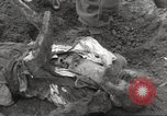 Image of victims of Flossenbürg Concentration Camp Flossenburg Germany, 1945, second 38 stock footage video 65675063168