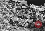 Image of displaced persons Wetzlar Germany, 1945, second 33 stock footage video 65675063173