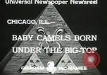 Image of baby camels Chicago Illinois USA, 1933, second 8 stock footage video 65675063205