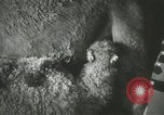 Image of baby camels Chicago Illinois USA, 1933, second 21 stock footage video 65675063205