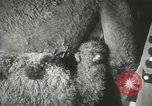 Image of baby camels Chicago Illinois USA, 1933, second 25 stock footage video 65675063205