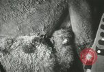Image of baby camels Chicago Illinois USA, 1933, second 26 stock footage video 65675063205