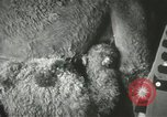 Image of baby camels Chicago Illinois USA, 1933, second 27 stock footage video 65675063205