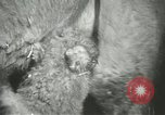 Image of baby camels Chicago Illinois USA, 1933, second 28 stock footage video 65675063205