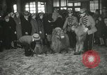 Image of baby camels Chicago Illinois USA, 1933, second 38 stock footage video 65675063205