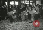 Image of baby camels Chicago Illinois USA, 1933, second 39 stock footage video 65675063205