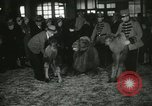 Image of baby camels Chicago Illinois USA, 1933, second 41 stock footage video 65675063205