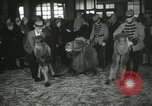 Image of baby camels Chicago Illinois USA, 1933, second 42 stock footage video 65675063205
