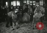 Image of baby camels Chicago Illinois USA, 1933, second 45 stock footage video 65675063205