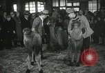 Image of baby camels Chicago Illinois USA, 1933, second 47 stock footage video 65675063205