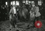 Image of baby camels Chicago Illinois USA, 1933, second 48 stock footage video 65675063205