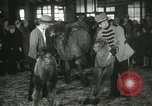 Image of baby camels Chicago Illinois USA, 1933, second 49 stock footage video 65675063205