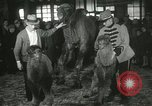 Image of baby camels Chicago Illinois USA, 1933, second 50 stock footage video 65675063205