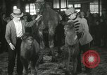 Image of baby camels Chicago Illinois USA, 1933, second 51 stock footage video 65675063205