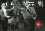 Image of baby camels Chicago Illinois USA, 1933, second 52 stock footage video 65675063205