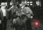 Image of baby camels Chicago Illinois USA, 1933, second 53 stock footage video 65675063205