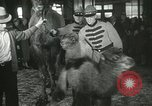 Image of baby camels Chicago Illinois USA, 1933, second 54 stock footage video 65675063205