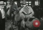 Image of baby camels Chicago Illinois USA, 1933, second 55 stock footage video 65675063205