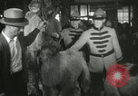 Image of baby camels Chicago Illinois USA, 1933, second 56 stock footage video 65675063205