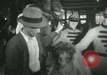 Image of baby camels Chicago Illinois USA, 1933, second 58 stock footage video 65675063205