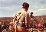Image of Soldier standing guard at sandbagged post Honolulu Hawaii USA, 1942, second 24 stock footage video 65675063477
