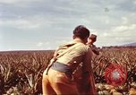 Image of Soldier standing guard at sandbagged post Honolulu Hawaii USA, 1942, second 26 stock footage video 65675063477