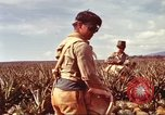 Image of Soldier standing guard at sandbagged post Honolulu Hawaii USA, 1942, second 28 stock footage video 65675063477