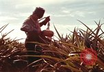 Image of Soldier standing guard at sandbagged post Honolulu Hawaii USA, 1942, second 46 stock footage video 65675063477