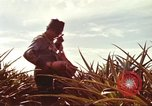 Image of Soldier standing guard at sandbagged post Honolulu Hawaii USA, 1942, second 50 stock footage video 65675063477