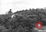 Image of British cavalry UK, 1936, second 2 stock footage video 65675063517