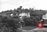 Image of British cavalry UK, 1936, second 3 stock footage video 65675063517