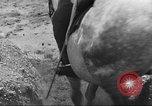 Image of British cavalry UK, 1936, second 27 stock footage video 65675063517