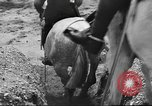 Image of British cavalry UK, 1936, second 28 stock footage video 65675063517