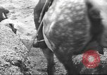 Image of British cavalry UK, 1936, second 45 stock footage video 65675063517